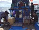 Thả cá thể rùa nặng 15kg do ngư dân bắt trở lại biển