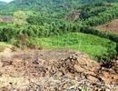 Truy tìm thủ phạm phá nát 43ha rừng tự nhiên