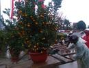 Chợ quê nhộn nhịp, người dân đội mưa mang hương sắc Tết về nhà