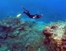Hy vọng  cấy ghép san hô, khôi phục hệ sinh thái biển