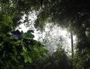 Loài người  tác động đến những cánh rừng nhiệt đới trong ít nhất 45.000 năm