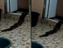 Rợn người clip sinh vật bí ẩn giống rắn trườn ra từ toilet