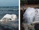 Xác sinh vật khổng lồ bí ẩn trôi dạt vào bờ biển Philipines
