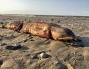 Sinh vật lạ đáng sợ trôi dạt vào bãi biển sau cơn bão