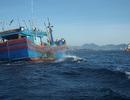 Huy động nhiều tàu cá tìm kiếm ngư dân mất tích ở Trường Sa