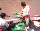 Thả hơn 1,4 triệu con giống thủy sản ra môi trường tự nhiên