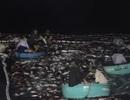"""Ngư dân kể chuyện bắt mẻ cá """"khủng"""" 150 tấn"""