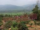 Thi thể người phụ nữ trên đồi chè trong tư thế bị trói vào gốc cây