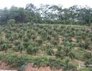 Thu hàng trăm triệu/năm từ mô hình 'đa cây'