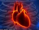 Tim mạch bị ảnh hưởng như thế nào khi ngồi làm việc nhiều?
