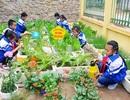 PGS.TS. Nguyễn Hữu Hợp: Kiến thức không phải là kết quả quan trọng nhất mà giáo dục mang lại!