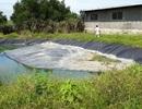 Thầy trò bức xúc vì trại lợn gây ô nhiễm kéo dài