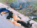 Hà Nội: Trộm 5 con chó, 1 người bị đâm chết tại chỗ