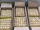 Thu giữ và tiêu hủy hơn 1 vạn quả trứng gia cầm nhập lậu từ Trung Quốc