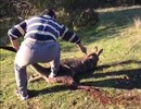 Australia bắt công dân Trung Quốc vì đâm chết dã man kangaroo