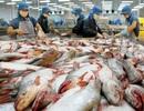 """Muốn """"thoát"""" thẻ vàng của EU phải dừng mua hải sản """"lậu"""" của ngư dân"""