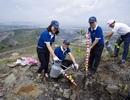 Vietnam Airlines tham gia trồng 50.000 cây xanh hoàn nguyên môi trường