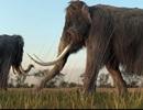 Sẽ mang voi ma mút lông dài đã bị tuyệt chủng quay trở lại?