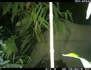 Voi rừng xuất hiện trở lại tại Vườn Quốc gia Vũ Quang