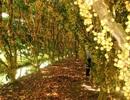 Hè về, rủ nhau du lịch... hái trái cây ở các miệt vườn miền Nam