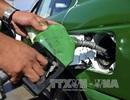 Sản xuất thành công nhiên liệu sinh học rẻ nhất thế giới