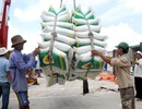 """VCCI cảnh báo nguy cơ """"phân chia địa bàn"""" trong xuất khẩu gạo"""