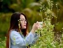 """Giới trẻ Sài Gòn """"sống ảo"""" bên vườn hoa tam giác mạch"""
