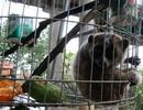 Quảng Bình: Người dân tự nguyện giao nộp động vật quý hiếm để thả về tự nhiên