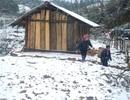 Tuyết đang phủ trắng đèo Ô Quý Hồ - Sa Pa