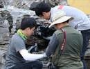 """Phát hiện hàng nghìn con """"kiến sát nhân"""" tại cảng Incheon, Hàn Quốc"""