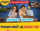 Học tiếng Anh: Tổng hợp thành ngữ về động vật hay và thông dụng nhất!