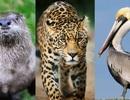 """Bạn có biết tên những động vật """"lạ"""" này?"""