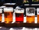 Các nhà khoa học phát hiện ra rằng bia có tác dụng chữa bệnh