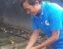 Ninh Bình: 8X mỗi năm kiếm gần nửa tỷ đồng nhờ nuôi ếch ộp