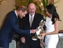 Vợ chồng Hoàng tử Harry lần đầu lộ diện sau khi có tin vui