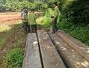 Phát hiện hơn 170m3 gỗ không rõ nguồn gốc tại nhà và xưởng cưa một hộ gia đình