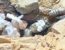 Phú Yên có 5 nguồn khoáng nóng nhưng chưa được khai thác đúng mức