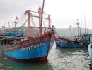 """Xuất hiện các loại """"cò"""" ở Cảng cá Quy Nhơn"""