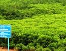 Phục hồi và phát triển rừng ngập mặn với kinh phí 2 triệu USD