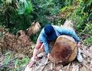 Cách chức 1 đội trưởng, đình chỉ 2 trạm trưởng trạm quản lý bảo vệ rừng