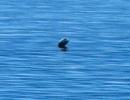 Canada xuất hiện sinh vật bí ẩn giống quái vật hồ Loch Ness