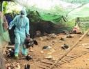 Xuất hiện ổ dịch cúm H6N1 ở Phú Yên