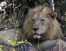 Bạn có dám ăn ngủ cùng thú hoang tại công viên hoang dã này?