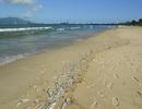 Cá chết trắng bờ biển Đà Nẵng