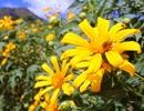 Hấp dẫn lễ hội hoa dã quỳ dưới chân núi lửa Chư Đăng Ya