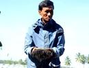 Hơn 10 vạn con tôm nuôi chết trắng hồ, nghi do bị đầu độc
