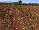 Mô hình nông nghiệp an toàn và bền vững của tương lai