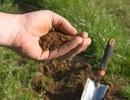 Đừng tìm đâu xa, dược liệu hỗ trợ hạ và ổn định huyết áp ngay trong vườn nhà