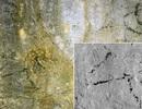 Phát hiện hình vẽ 12.000 năm tuổi có từ Kỷ băng hà