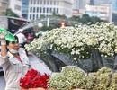 Ngắm cúc họa mi tinh khôi mang đông về khắp phố phường Hà Nội